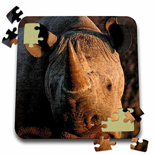 Africa Rhinoceros Horn - Danita Delimont - Rhinos - Desert black rhinoceros portrait, Kalahari Desert, Africa - 10x10 Inch Puzzle (pzl_276412_2)