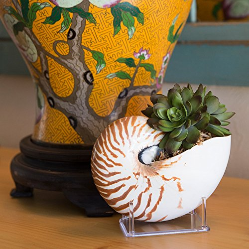 The 8 best nautilu collectibles
