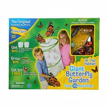 Amazon.com: Insect Lore GIANT BUTTERFLY GARDEN by Insect Lore: Toys ...