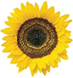 Paper House Productions Jigsaw Shaped Puzzle 17.5 by 18-Inch, Sunflower (500 Pieces)