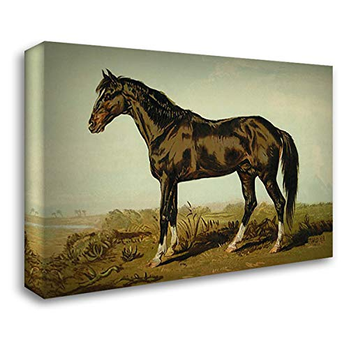 Dongola Horse, 1900 24x18 Gallery Wrapped Stretched Canvas Art by Sidney, Samuel