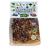 Clark&Co Organic 1500 Live Ladybugs - Good Bugs for