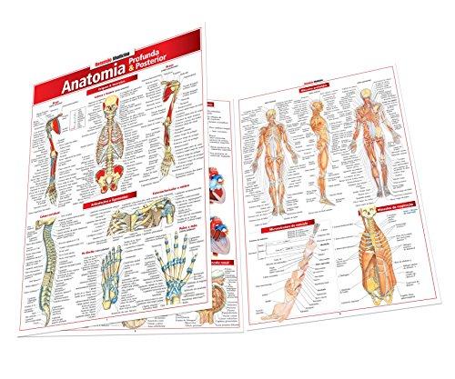 Anatomia Profunda e Posterior