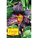 Forge 10.1