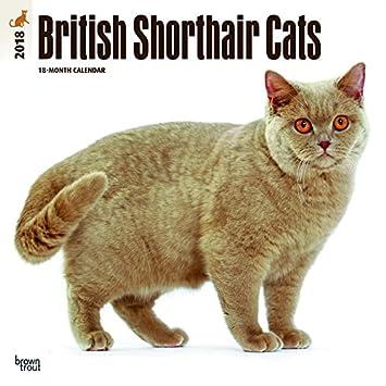 Calendario 2018 gato británico de pelo corto - gato de Race - gatitos + incluye un - Agenda de bolsillo 2018: Amazon.es: Oficina y papelería
