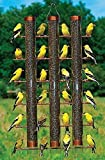 CHSGJY Finches Favorite 3 Tube Finch Thistle Seed Bird Feeder Cooper