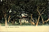 An Oak Avenue Scenic California Original Vintage Postcard