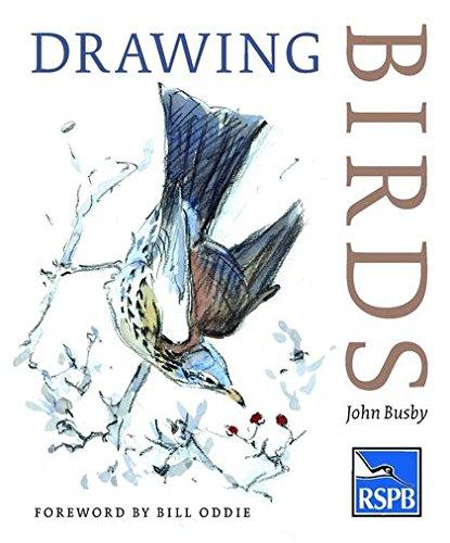 Drawing Birds pdf epub