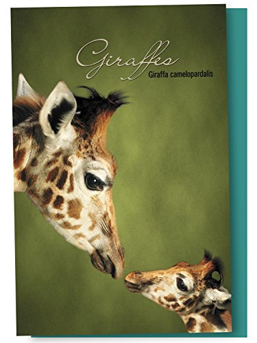 Tree-Free Greetings EcoNotes 12-Count Notecard Set With Envelopes, 4 x 6 Inches, Parent And Child Giraffe Themed Wildlife Art (66812)