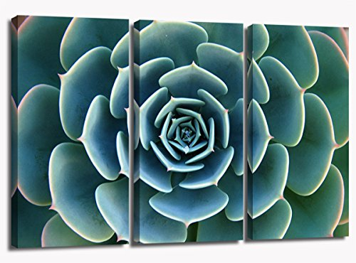 Pretty Large Green Succulent Plant Flower Stone Lotus Pictures Printed on Canvas for Modern Living Room Wall Art Decorative Painting Ready to Hang by Wood Frame Drawing 16X32 X3