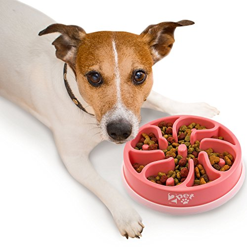 pink slow feed dog bowl - 9