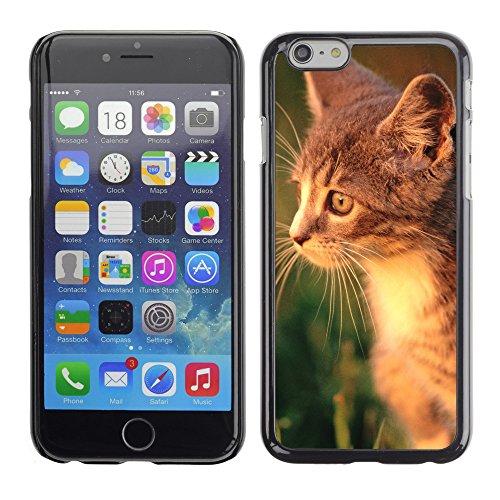 "Premio Sottile Slim Cassa Custodia Case Cover Shell // V00003184 curieux chaton // Apple iPhone 6 6S 6G PLUS 5.5"""