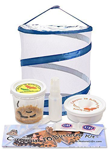 Live Butterfly Kit: Shipped with 5 Painted Lady Caterpillars Now- Pop Up Cage