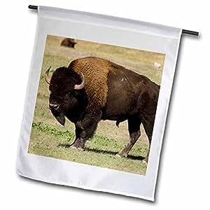 Danita Delimont - Bison - Bison, Custer SP, Black Hills, South Dakota - US42 SPI0022 - Sergio Pitamitz - 12 x 18 inch Garden Flag (fl_94322_1)