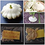buy White Patty Pan Courgette ~10 Top Quality Seeds - Amazing Variety! now, new 2018-2017 bestseller, review and Photo, best price $10.00