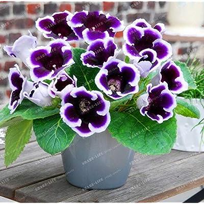 Kasuki 9 Colors Gloxinia Bonsai Sinningia Gloxinia Flower Bonsai Home Bonsai DIY for Garden Ornamental-Plant 100PCS - (Color: 15): Garden & Outdoor