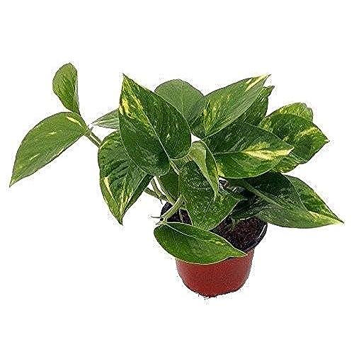 Indoor Plants: Amazon.com