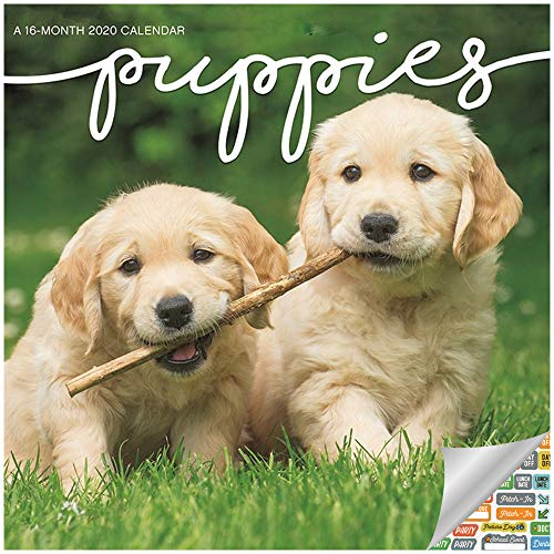 Puppies Calendar 2020 Set