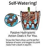 "Aquaphoric Self Watering Planter (5"") + Fiber"