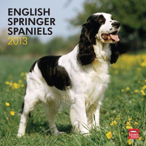 Spaniel 2013 Calendar - English Springer Spaniels 2013 Square 12X12 Wall