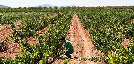 Artadi Pasos de San Martin, Vino Tinto, 75 cl - 750 ml