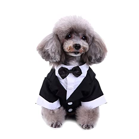 LAAT Traje de Elegante para Perro con Traje de Lazo para Boda ...