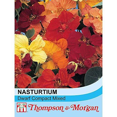 t&m Nasturtium Dwarf Compact Mixed (Approx. 50 Seeds)