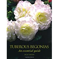 Tuberous Begonias: An Essential Guide