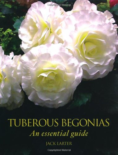 Plant Begonias Tuberous (Tuberous Begonias: An Essential Guide)