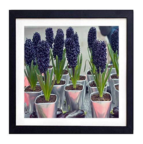 GLITZFAS PRINTS Framed Wall Art - hyacinths pots Purple Eggplant - Art Print Black Wood Framed Wall Art Picture for Home Decoration - 14