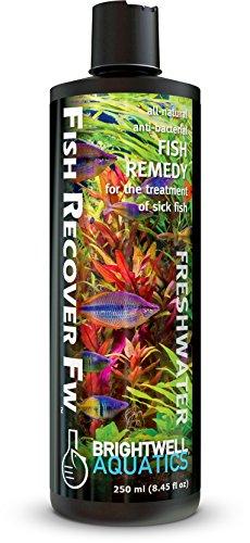 Brightwell Aquatics Fish Recover Fw Natural Herbal Medication For Open Sores  250Ml