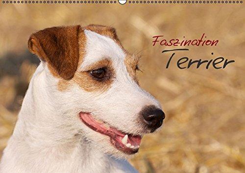 Faszination Terrier (Wandkalender 2015 DIN A2 quer): Terrier in beeindruckenden Bildern (Monatskalender, 14 Seiten) (CALVENDO Tiere)