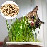HITSAN 90g Pure Natural Grown Sweet Oat Grass Seeds Cat Dog Rabbit Pet Health Food 90g Pure Natural Grown One Piece