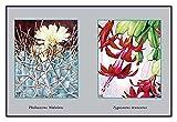 """Buyenlarge 0-587-10286-1-P1827 """"Thelocactus Nidulans"""" Paper Poster, 18"""" x 27"""""""