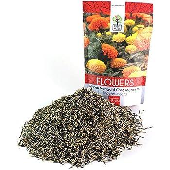 Premium Ground Cherry Seeds Organic Heirloom 50 SEEDS Non Gmo Open Pollinated