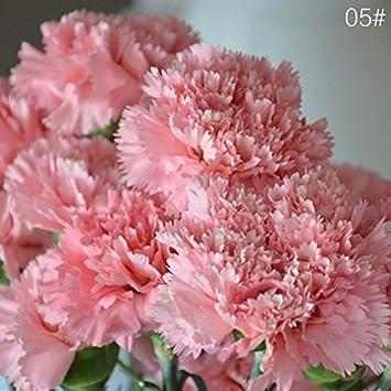 Carnation harvesting history.