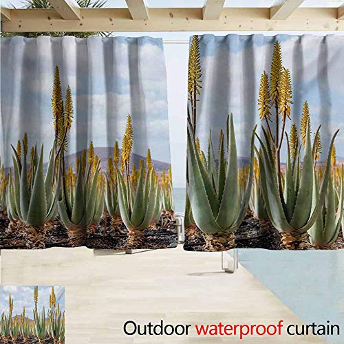 Plant Custom Outdoor Curtain Photo from Aloe Vera Plantation Medicinal Leaves Remedy Fuerteventura Canary Islands Room Darkening Thermal W55 xL63 Multicolor