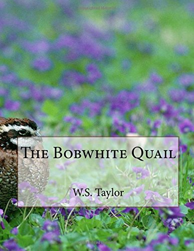 Bobwhite Quail - The Bobwhite Quail