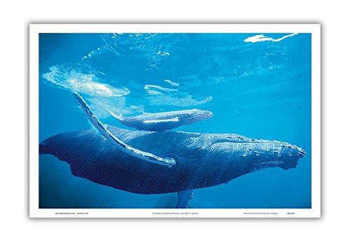 Mother and Calf - Hawaiian Humpback Whales (Kohol_) - Original Color Photograph by Michael S. Nolan - Hawaiian Master Art Print - 12 x 18in