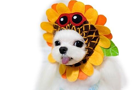 Crazy tienda disfraz de gato de perro mascota de girasol sombrero ...