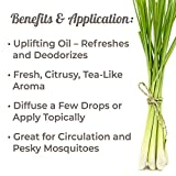Plant Therapy Lemongrass Organic Essential Oil | 100% Pure, USDA Certified Organic, Undiluted, Natural Aromatherapy, Therapeutic Grade | 10 milliliter (1/3 ounce)