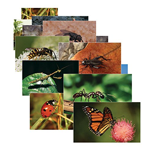 Stages Learning Materials SLM158 Insects & Bugs Real Life Learning Poster Card Set (Pack of 14)