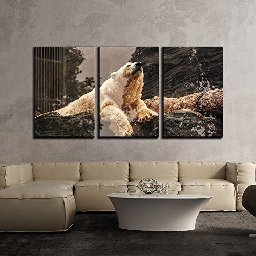 wall26 - 3 Piece Canvas Wall Art - Polar Bear on the Rock - Modern Home Decor Stretched and Framed Ready to Hang - 16