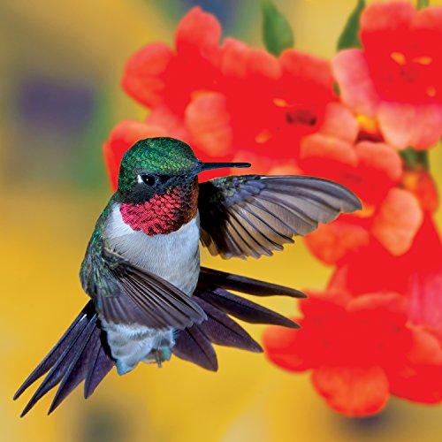 Audubon Birds: Hummingbird 500 Piece Jigsaw Puzzle