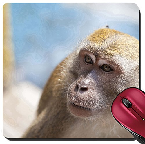 Liili Suqare Mousepad 8x8 Inch Mouse Pads/Mat IMAGE ID: 26079155 Macaque Monkey Portrait Closeup at Batu Caves in - In Malaysia Sale