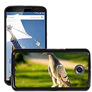 Etui Housse Coque de Protection Cover Rigide pour // M00129552 Pájaros Paloma Hermosa Naturaleza // LG Google Nexus 6