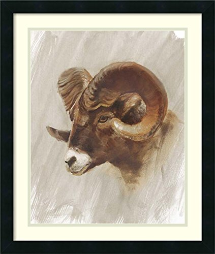 Framed Art Print 'Western American Animal Study I' by Ethan (Rams Portrait Picture Frame)