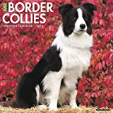Just Border Collies 2020 Calendar