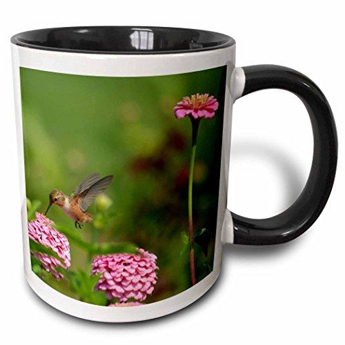 3dRose mug_63587_4