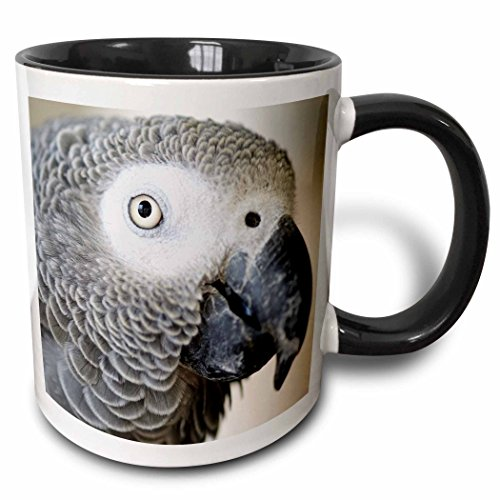 Parrot Mug Large - 3dRose 140254_4 African Grey Parrot Tropical Bird-Na02 Mfr0001-Mfr Ceramic Mug, 11 oz, Black/White